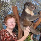 sandy koala